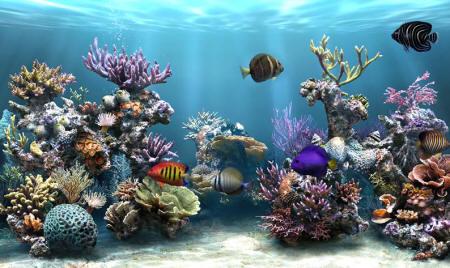 Avoir Un Aquarium ecran de veille sim aquarium 2
